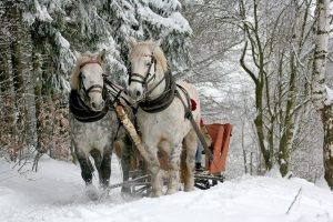 Horses pulling a sleigh in the snow